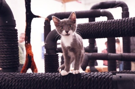 ThecatShow-feat